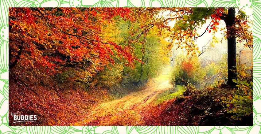 AromaBuddies-Herbst1